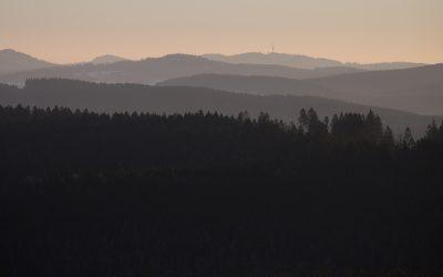 """Projekt """"Jetzt hilft Bürgerstiftung dem Wald"""""""